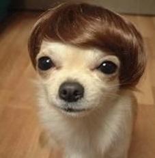 dogs-wearing-wigs-0011